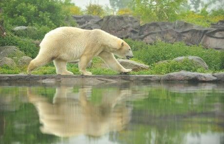 Die Zoom-Erlebniswelt, wie der Zoo in Gelsenkirchen offiziell heißt, präsentiert seine Tiere in vergleichsweise großen Gehegen