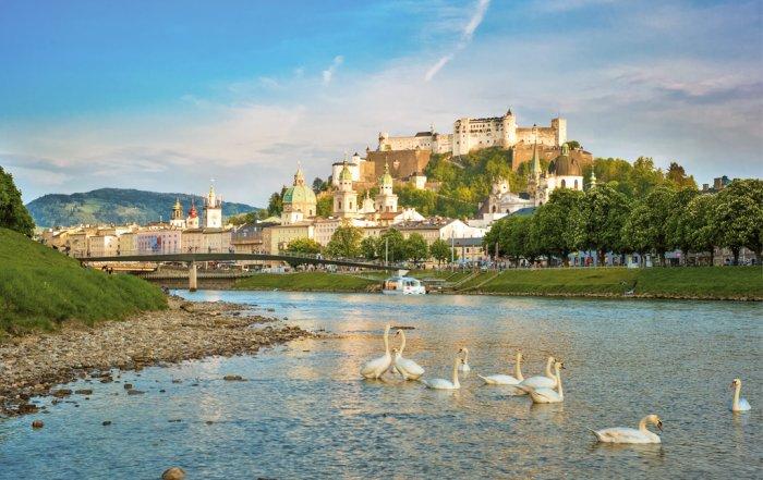Schwäne auf der Salzach vor Salzburg